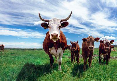 Exportaciones Argus Meats
